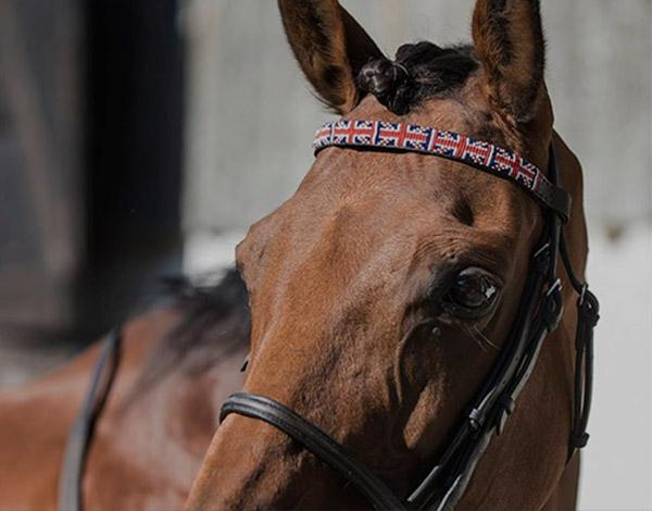 Browbands - Exciting new product to Simba Jones!