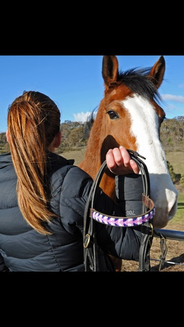 Browbands in Australia